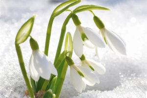 стихи о пробуждении природы и духа